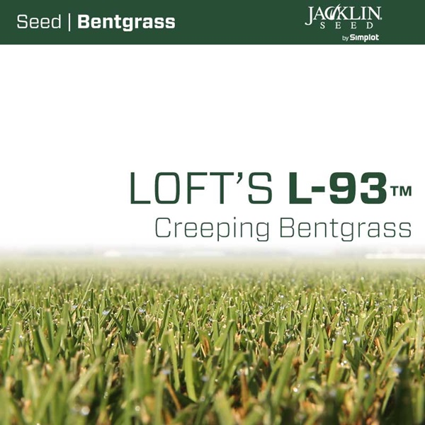 L-93 Creeping Bentgrass